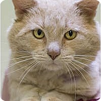 Adopt A Pet :: Sweet Baby Ray-Ray - Chicago, IL