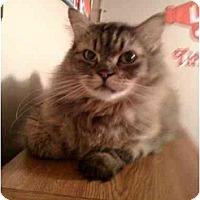 Adopt A Pet :: Mr. Jingles - Lake Charles, LA