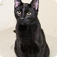 Adopt A Pet :: Frosty - Shelton, WA