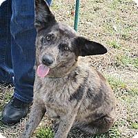 Adopt A Pet :: CHELSEA - Glastonbury, CT