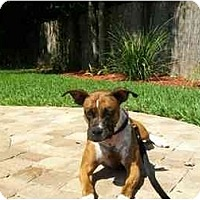 Adopt A Pet :: Ellie May - Jacksonville, FL