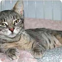 Adopt A Pet :: Diamond - Racine, WI