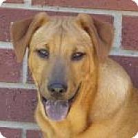 Adopt A Pet :: Levi - New Boston, NH
