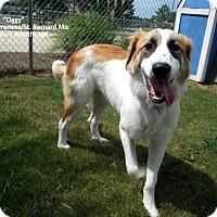 Adopt A Pet :: Oggy - Gadsden, AL