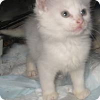 Adopt A Pet :: Wizard - Dallas, TX