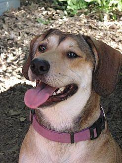 Hound (Unknown Type)/German Shepherd Dog Mix Dog for adoption in Destrehan, Louisiana - Sally Ann