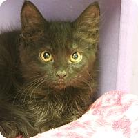 Adopt A Pet :: Kipnis - Medina, OH