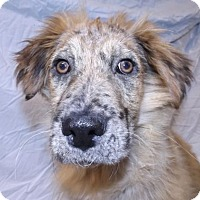 Adopt A Pet :: Cassidy - Foster Care - Oxford, MS