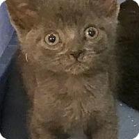 Adopt A Pet :: Carbon - ADOPTED - East Brunswick, NJ