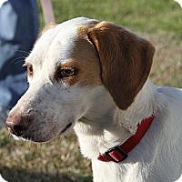 Adopt A Pet :: Lady - Sylvania, GA
