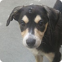Adopt A Pet :: Lollie(ADOPTED!) - Chicago, IL