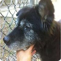 Adopt A Pet :: GEMMA - Houston, TX
