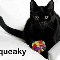 Adopt A Pet :: Squeaky - Portland, OR