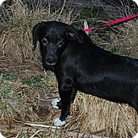 Adopt A Pet :: Tommy - Nashville, TN