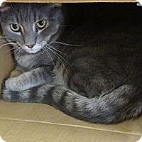 Adopt A Pet :: fred - Youngtown, AZ