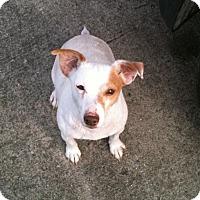 Adopt A Pet :: Spuds - Hazard, KY