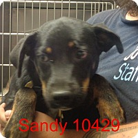 Adopt A Pet :: Sandy - Greencastle, NC