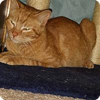 Adopt A Pet :: Candy - Fayette City, PA