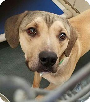 Terrier (Unknown Type, Medium) Mix Dog for adoption in Fort Smith, Arkansas - Diesel