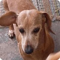 Adopt A Pet :: Annie - Pearland, TX