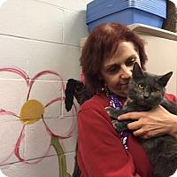Adopt A Pet :: Honey - Manchester, CT