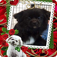 Adopt A Pet :: Teddy - E. Wenatchee, WA
