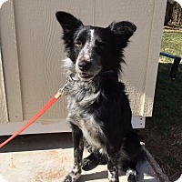 Adopt A Pet :: Marduk - Snyder, TX