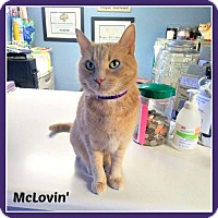 Adopt A Pet :: McLovin' - New Richmond,, WI