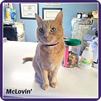 Adopt A Pet :: McLovin' - New Richmond,, WI
