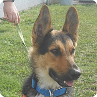 Adopt A Pet :: George - Lockhart, TX