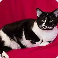 Adopt A Pet :: Ally - Colorado Springs, CO
