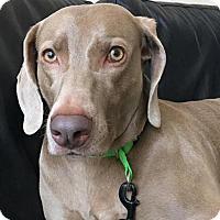 Adopt A Pet :: Maisy - CUMMING, GA