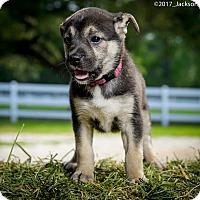 Adopt A Pet :: Becky - Folsom, LA