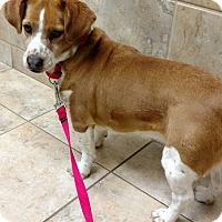 Adopt A Pet :: Gypsy - Barrington, IL