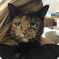 Adopt A Pet :: Lorelai - Oak Park, IL