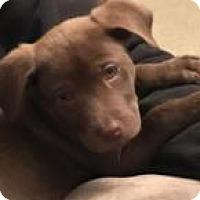 Adopt A Pet :: Max - Columbia, MD