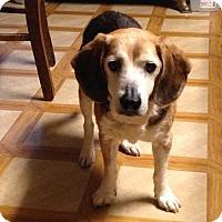 Adopt A Pet :: Clark - Huntley, IL