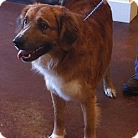 Adopt A Pet :: Rocky - New Canaan, CT