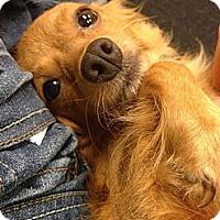 Adopt A Pet :: Millie Mae - Lancaster, OH