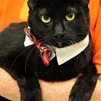 Adopt A Pet :: Dinero - Baton Rouge, LA