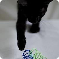 Adopt A Pet :: Butler - Jefferson, NC
