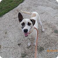 Adopt A Pet :: Kip - Boston, MA
