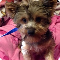 Adopt A Pet :: Teddy - Kansas city, MO