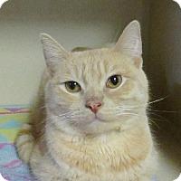 Adopt A Pet :: Sloan - Lloydminster, AB