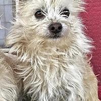Adopt A Pet :: George - Lancaster, CA