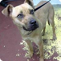 Adopt A Pet :: NORA - Atlanta, GA
