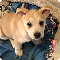 Adopt A Pet :: Lulu - BONITA, CA