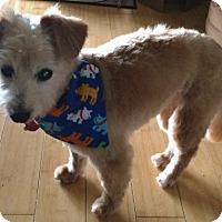 Adopt A Pet :: Brady - Harrisburg, PA