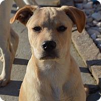 Adopt A Pet :: Wilson - Allen town, PA