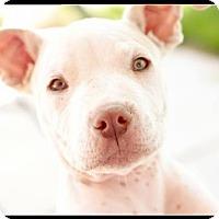 Adopt A Pet :: Vito - Los Banos, CA